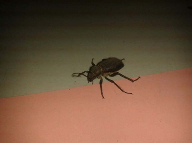 Whatever this is, was living in the corner of my classroom. Photo taken just before the maids hoovered up a lizard.