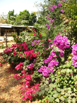 Thailand is full of so much colour <3
