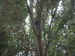 Spot the koala!